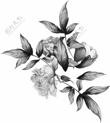 灰色花图片