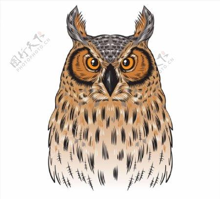彩绘褐色猫头鹰图片