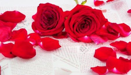 唯美玫瑰花拍摄图片