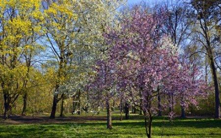 春天自然景观图片
