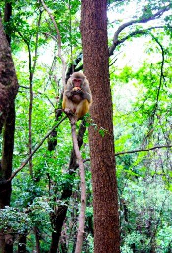 景区猴子摄影图片