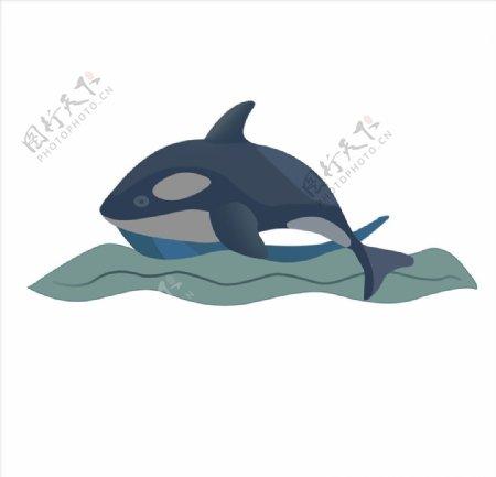 海豚图案图片