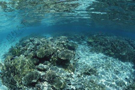 海底世界游弋的鱼群图片