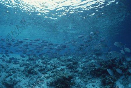 海洋里面的鱼群图片