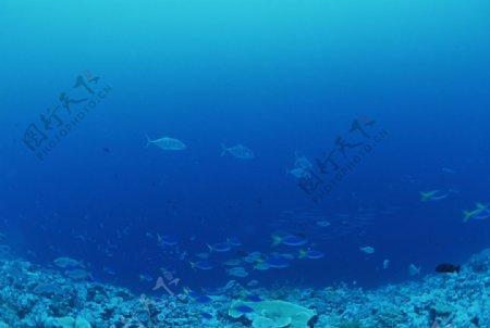 海底的弋的鱼群图片