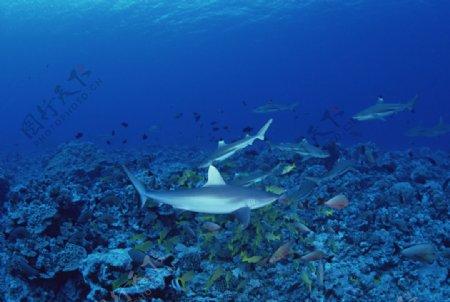 海底的鱼群图片