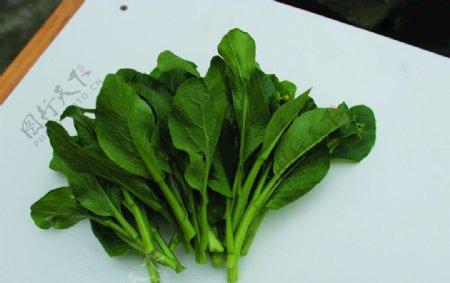 蔬菜菜苔白菜图片