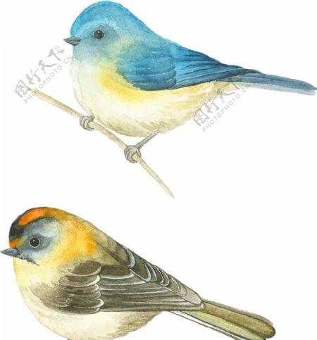 手绘矢量水彩小鸟图片