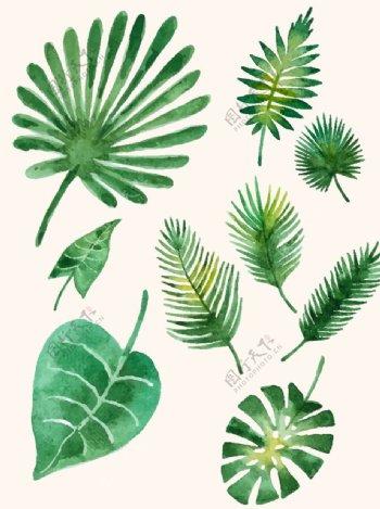 水彩绿叶图片