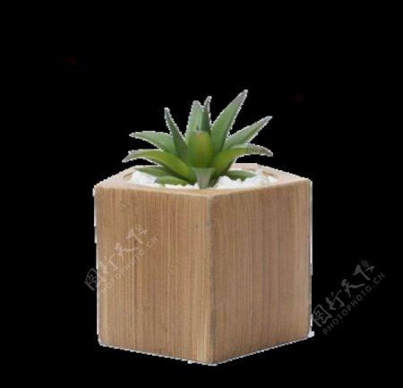 盆栽植物绿色叶子透明素材图片