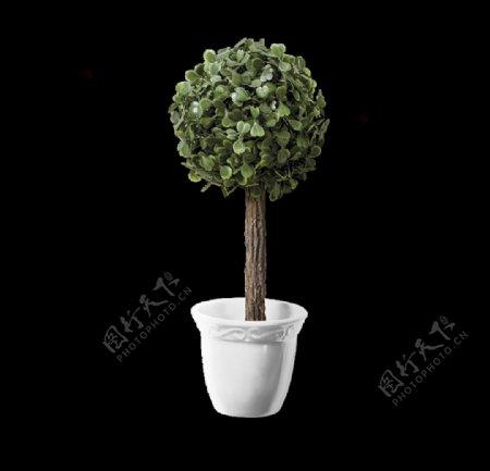 圆形盆栽图片