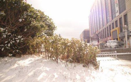阳光下的雪景图片