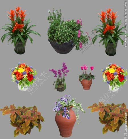 盆栽免抠素材图片