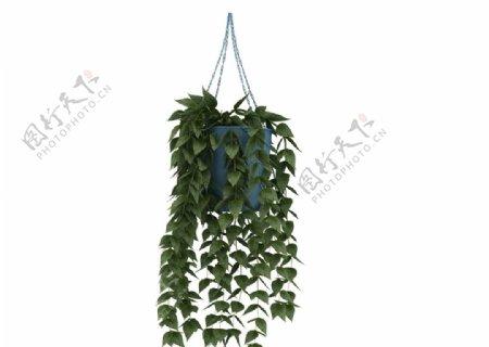 吊篮植物3d模型图片