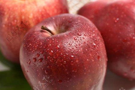 苹果特写图片