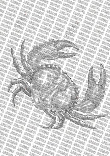 素描螃蟹图片