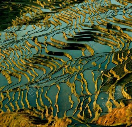 梯田风景油画图片