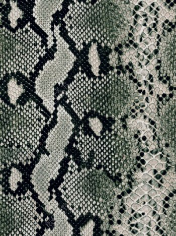 蟒蛇纹印花蛇纹皮革印花图片