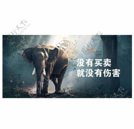 保护大象图片