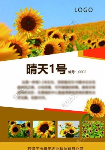 向日葵海报图片