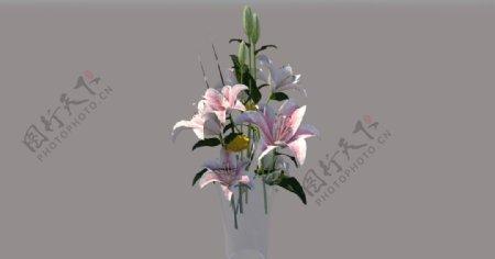 花艺玻璃花瓶花瓶植物图片