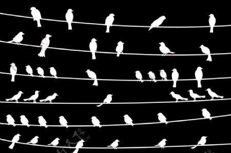矢量小鸟图片图形