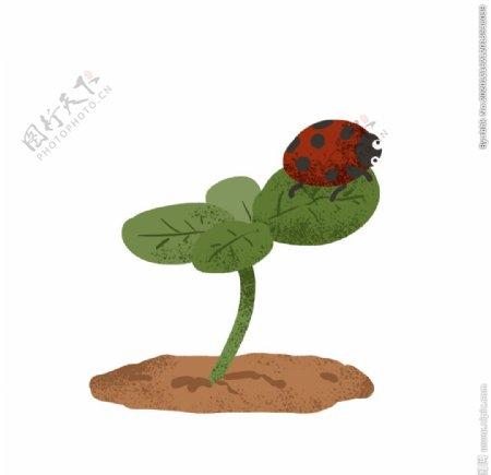 瓢虫插画图片