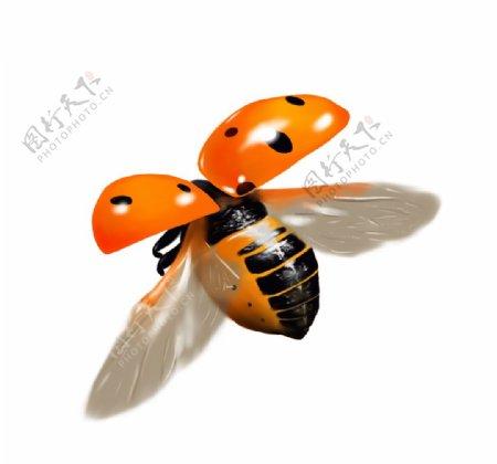 手绘飞行瓢虫图片