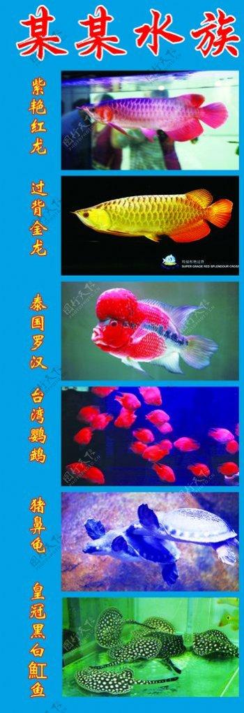 水族海报图片