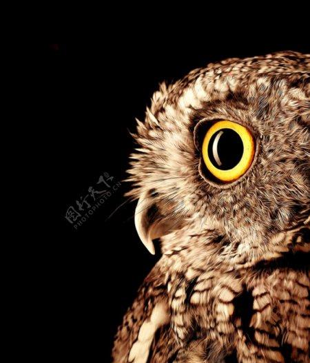 猫头鹰油画图片