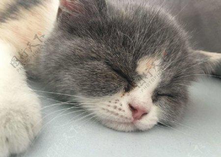 睡觉的小猫图片