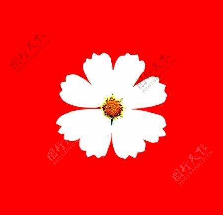 野菊花图片