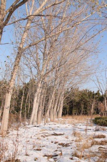 雪后森林图片