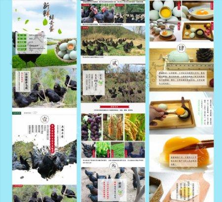 绿壳鸡蛋详情页图片