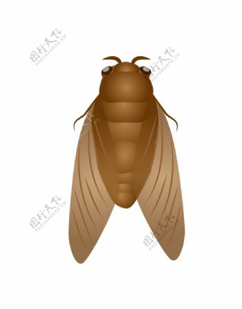 动物蝉的卡通插画图片