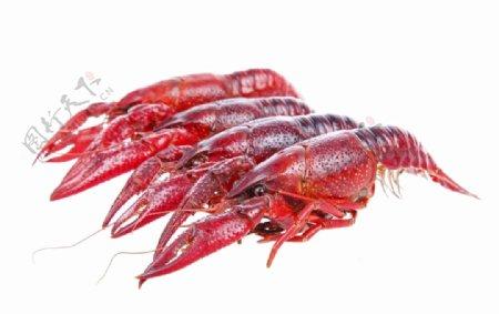 麻辣小龙虾图片