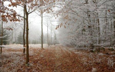 森林冬天图片